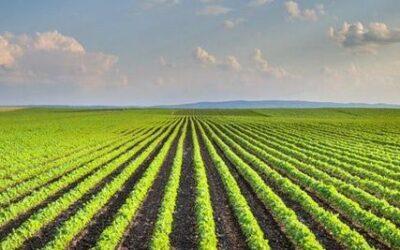IL FUTURO DELLA POLITICA AGRICOLA COMUNE